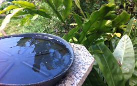 Saúde divulga 47º Boletim da Dengue