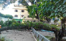 Galho de árvore cai em jardim da prefeitura de Alegre