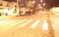 Boiada resolve dar uma volta no centro de Guaçuí na noite dos namorados.