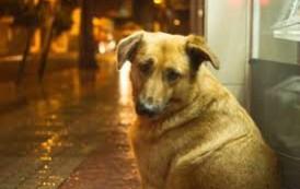 Assembleia Legislativa do ES aprova multa para quem abandonar animais domésticos