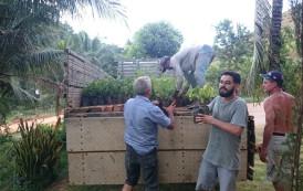 Ações de reflorestamento em Iúna promovem conservação do solo e água