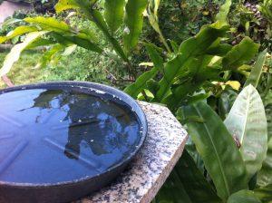Umas das formas de prevenir a doença é não deixar água parada em recipientes de plantas.