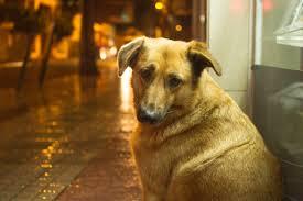 Projeto prevê multa para quem abandonar animais domésticos.